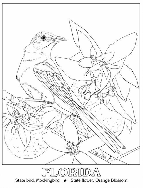 498x658 State Birds Amp Flowers Kyhawke