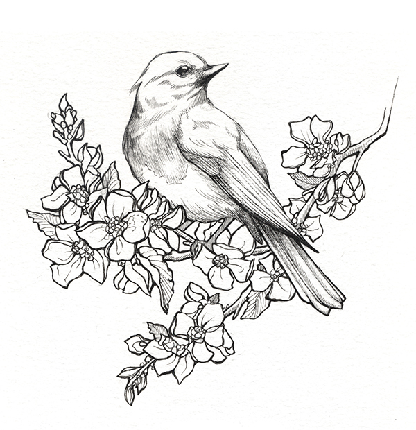 600x620 State Birds Amp Flowers On Behance Sister Tattoos