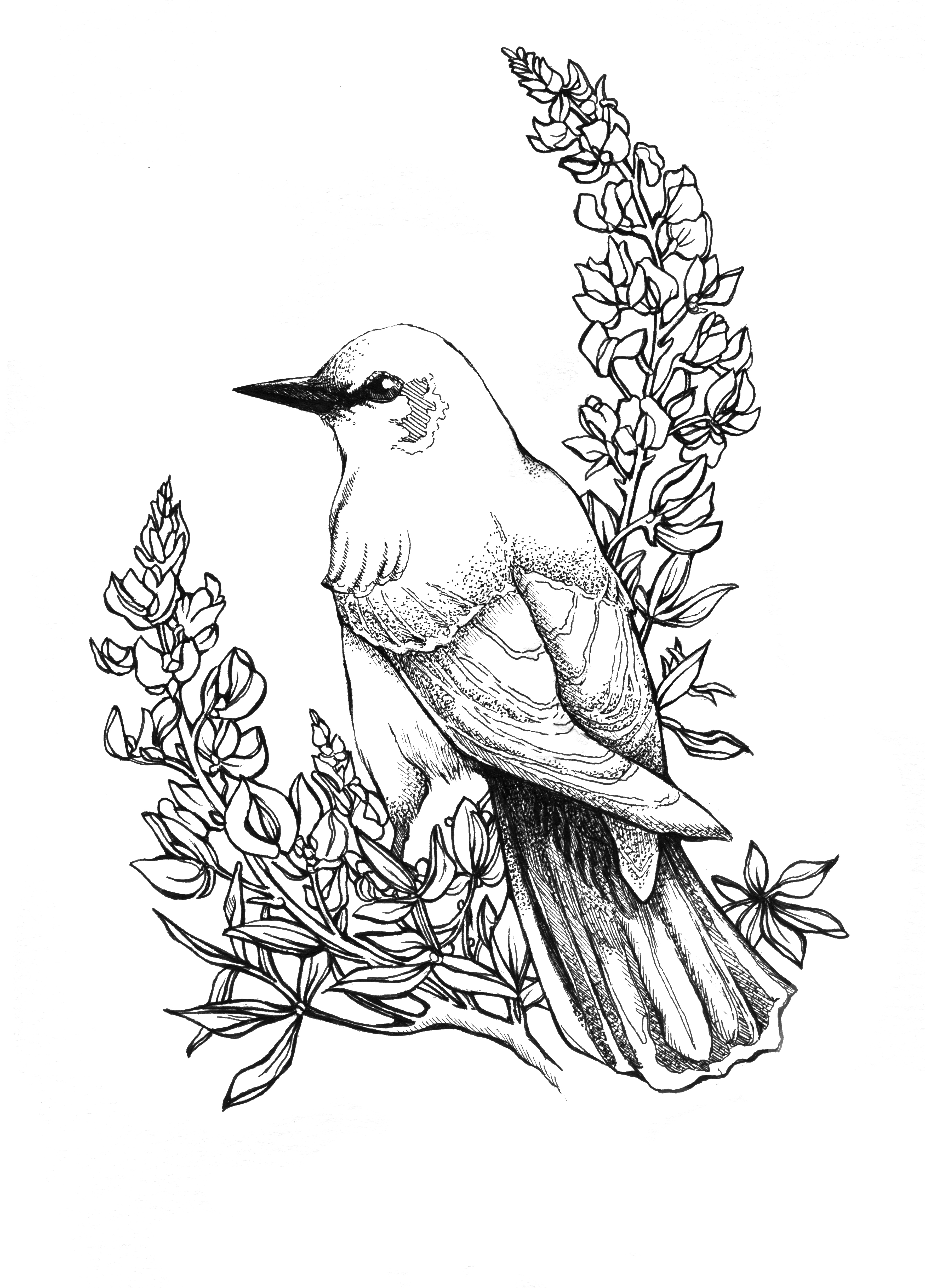 Birds And Flowers Drawing At GetDrawings.com | Free For Personal Use Birds And Flowers Drawing ...