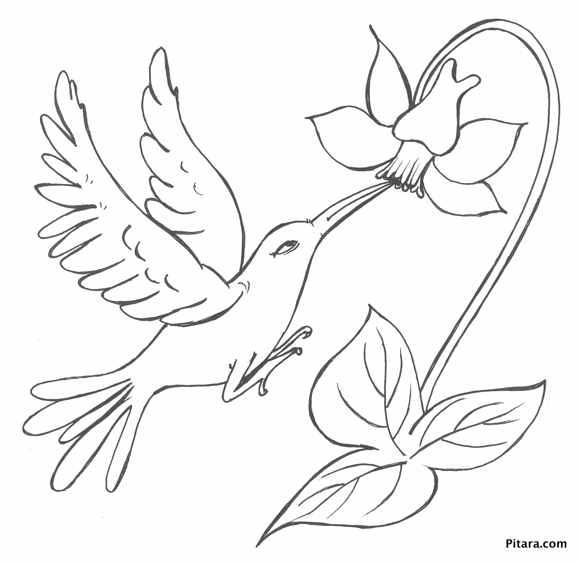 2264x2192 Bird With Flower Coloring Page Pitara Kids Network