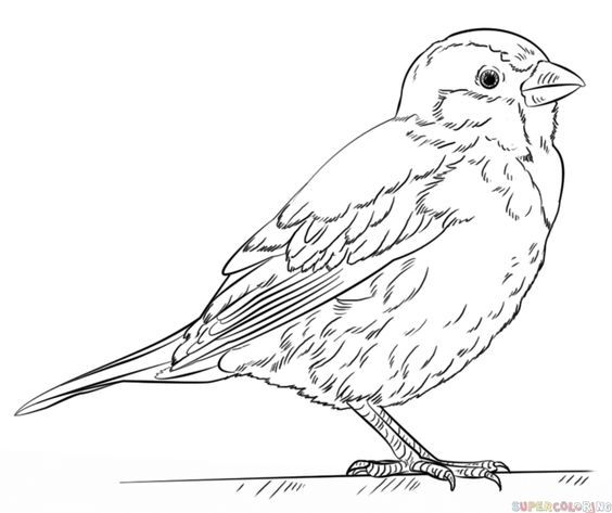 564x473 Bluebird Coloring Page Draw Coloring To Cure Bluebird Coloring