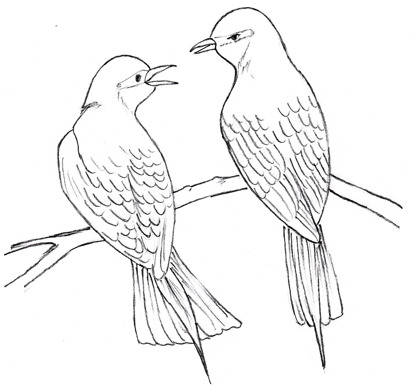 1400x1339 Drawing Of Two Birds