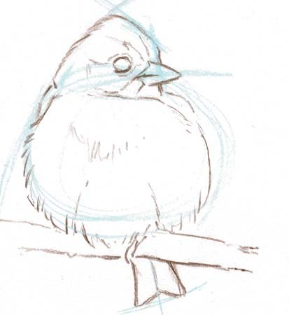 413x450 From The Laws Guide To Drawing Birds