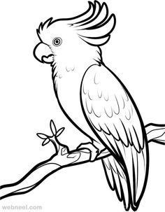 236x303 How To Draw A Cockatoo Animals Drawings