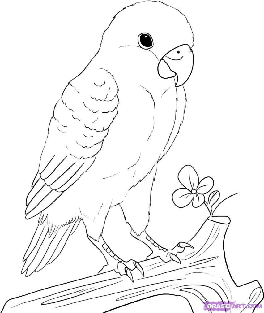 854x1011 Wedding Love Birds Drawing For Bird Sketch Images