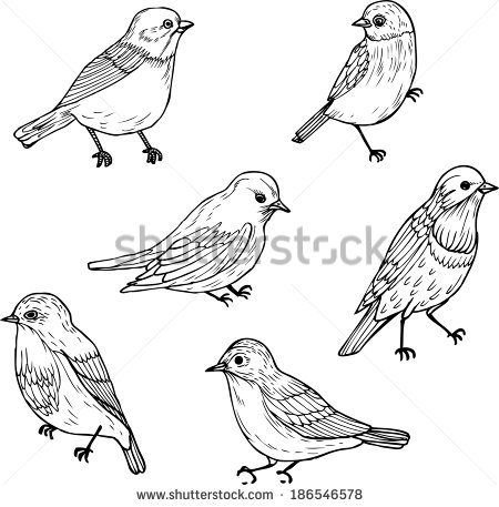 450x457 Bird Line Drawing Set Of Line Drawings Of Birds Bird