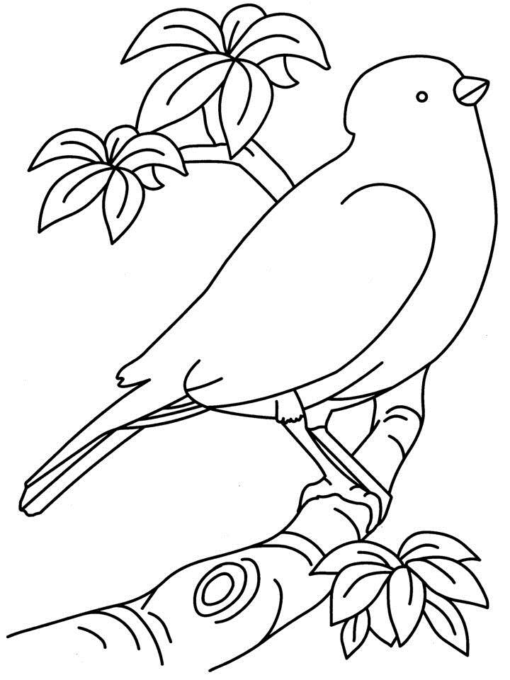 720x960 Birds Coloring Page Printable