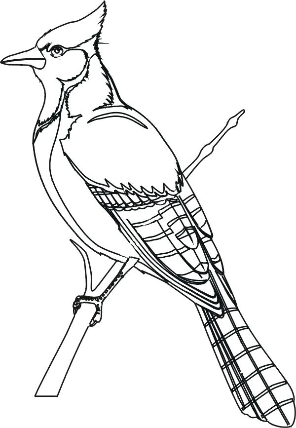 600x867 Classy Bird Coloring Pages For Adults Image Pictures Toddlers Epic