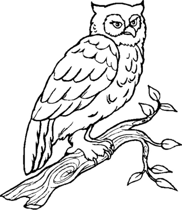 635x734 Coloring Pages Impressive Draw An Owl Cute