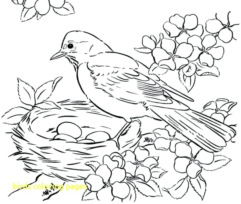 777x657 Coloring Pages For Birds Bird Group Page