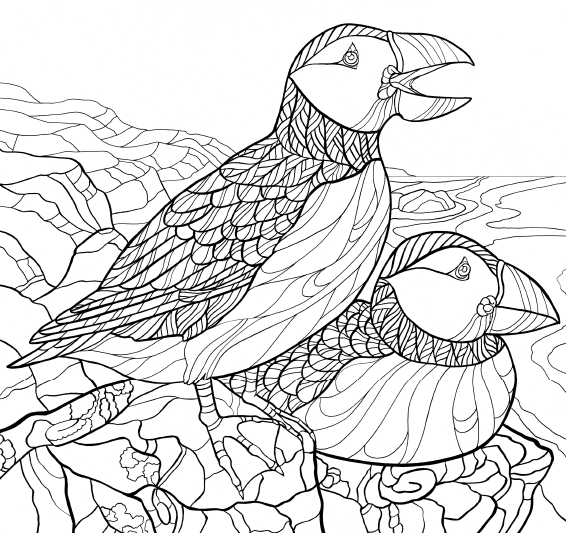 566x533 AMERICA39S FAVORITE BIRDS Coloring Page Downloads