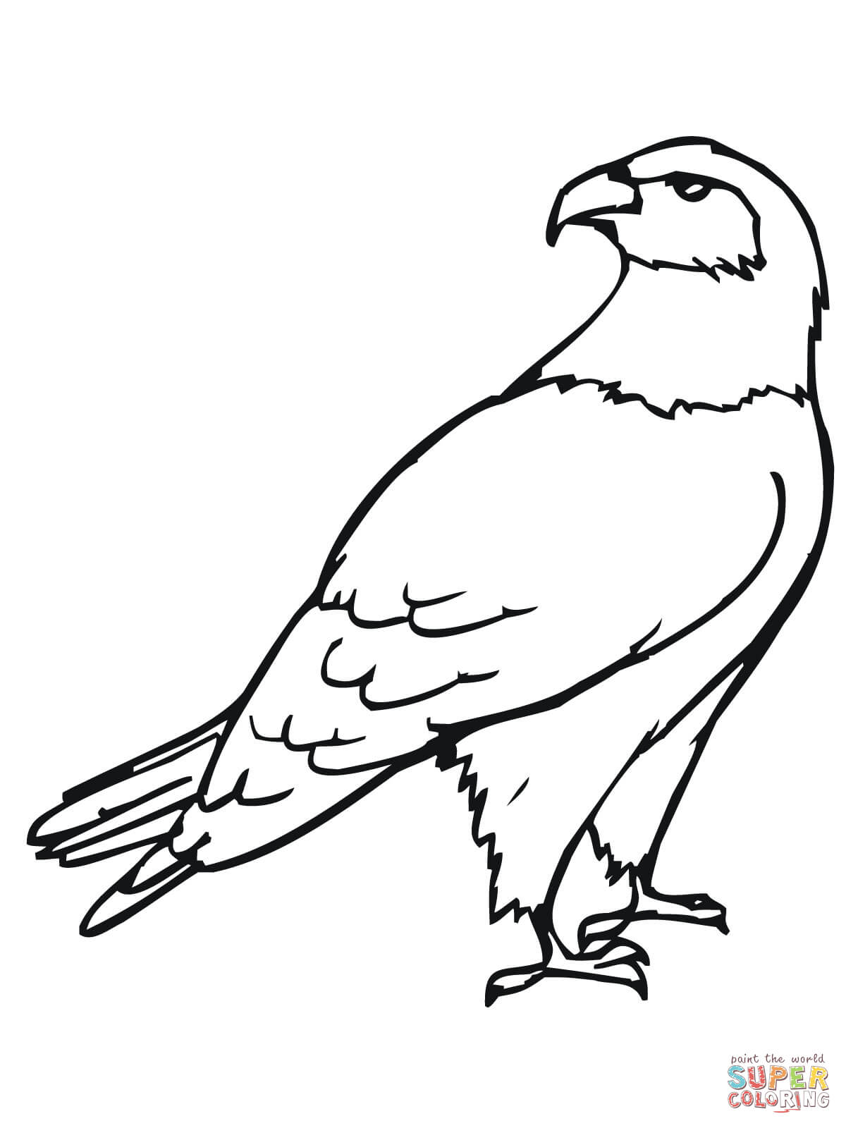 1200x1600 Hawk Bird Coloring Page Free Printable Pages