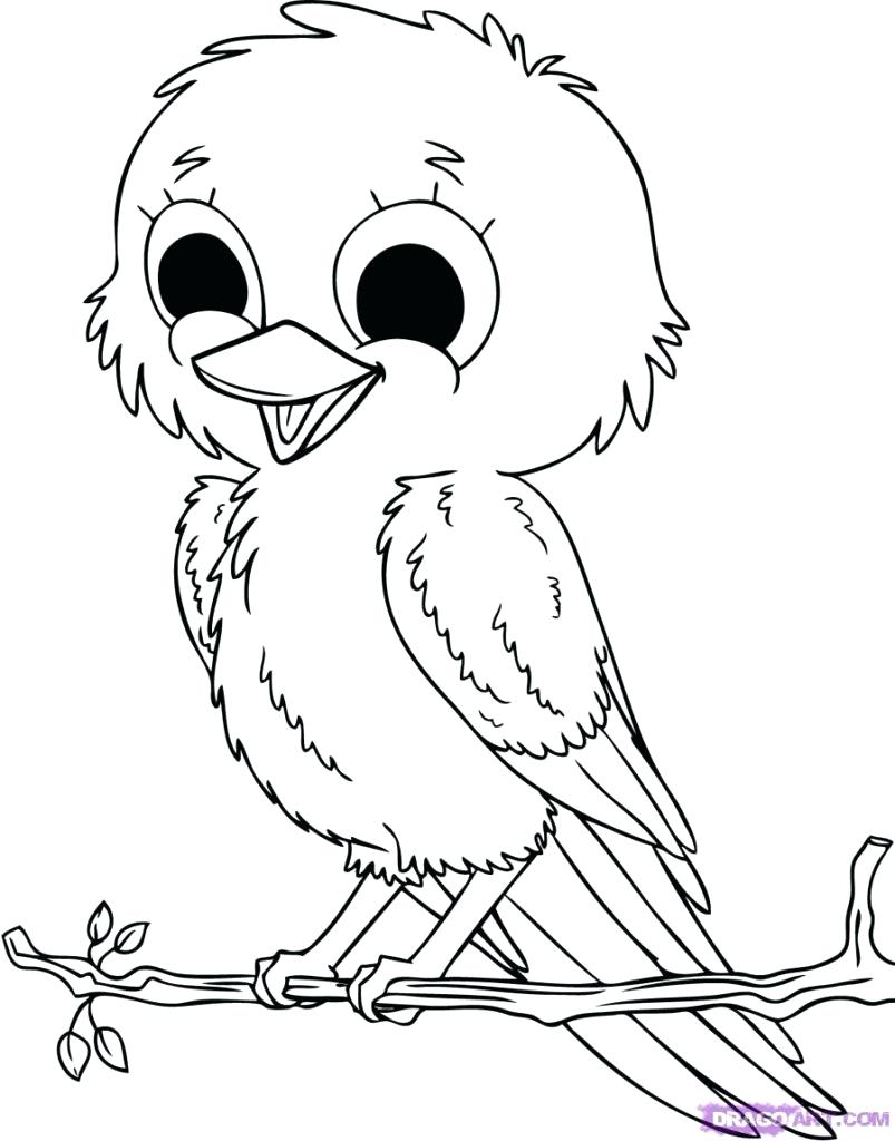 Attractive 803x1024 Coloring Coloring Pages Bird Pictures Of Birds To Colour