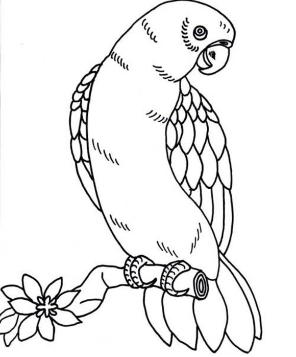 580x698 Amazing Tropicbird Animal Coloring Pages Bird Page Parrot