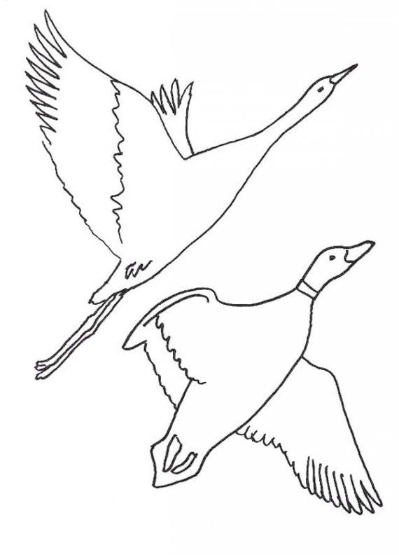 570x792 Bird Migration Coloring Sheet Hibernation Pages
