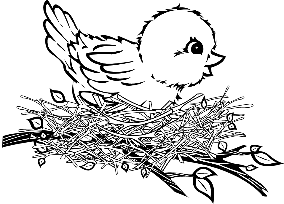 958x688 Nest Drawing Png Transparent Nest Drawing.png Images. Pluspng