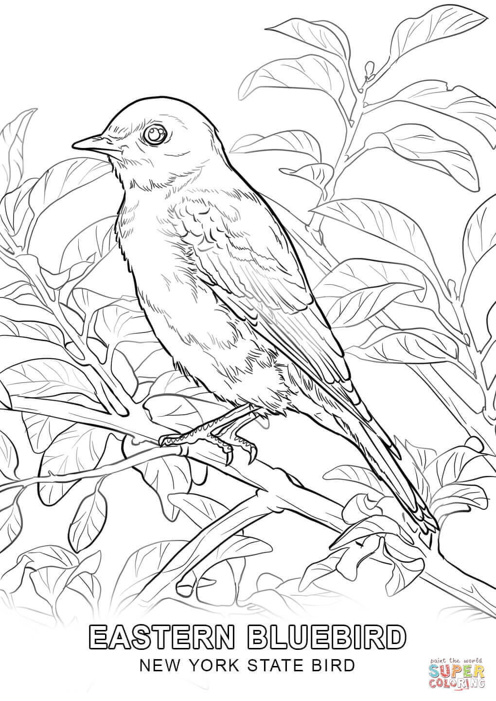 1020x1440 New York State Bird Coloring Page Free Printable Coloring Pages
