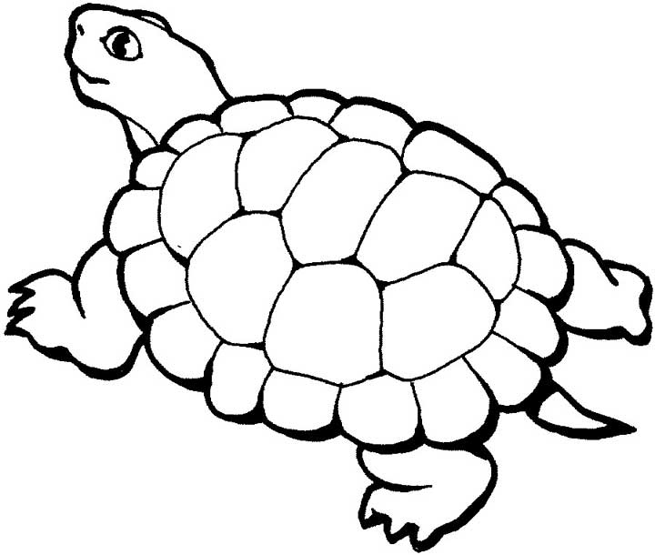 720x610 Turtle Coloring Page For Kids