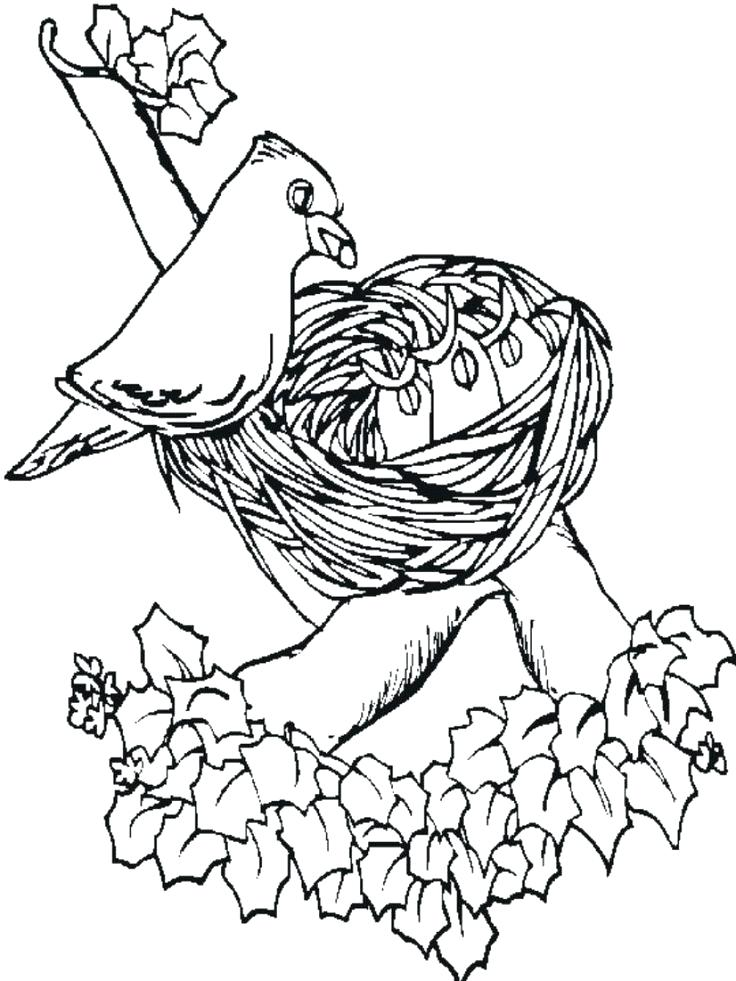 736x981 Free Coloring Pages Of Birds Trend Bird For Adults