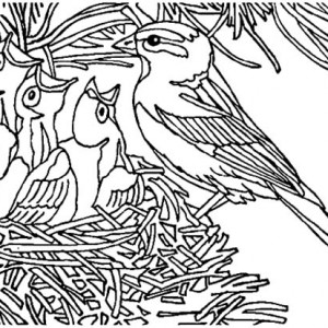 300x300 Baby Bird Open Their Mouth Wide In Nest Coloring Pages Best