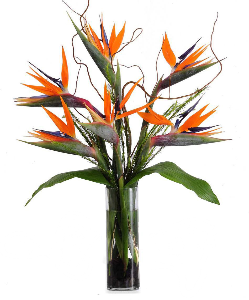 Birds Of Paradise Flower Drawing at GetDrawings.com | Free for ...
