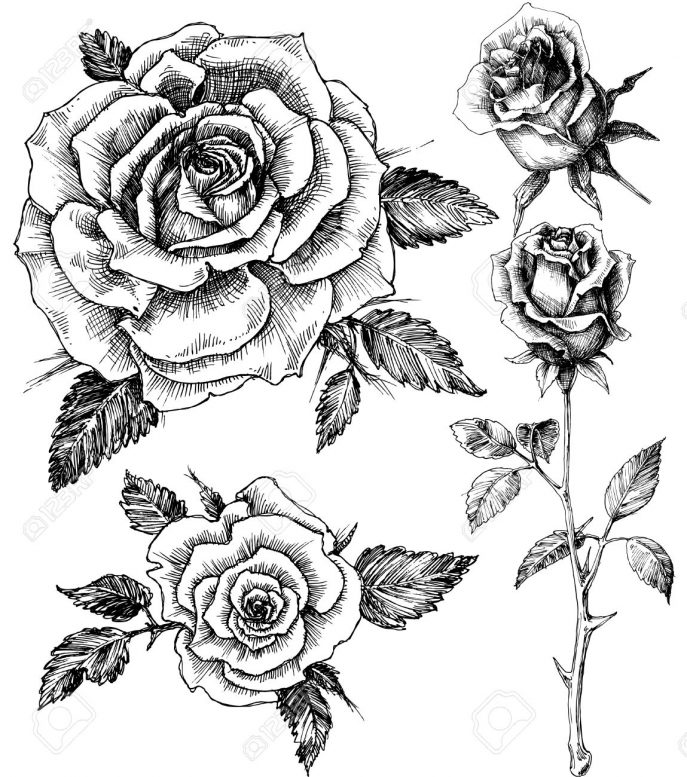 687x777 Coloring Pages Drawn Rose Draw Drawn Rose Drawn