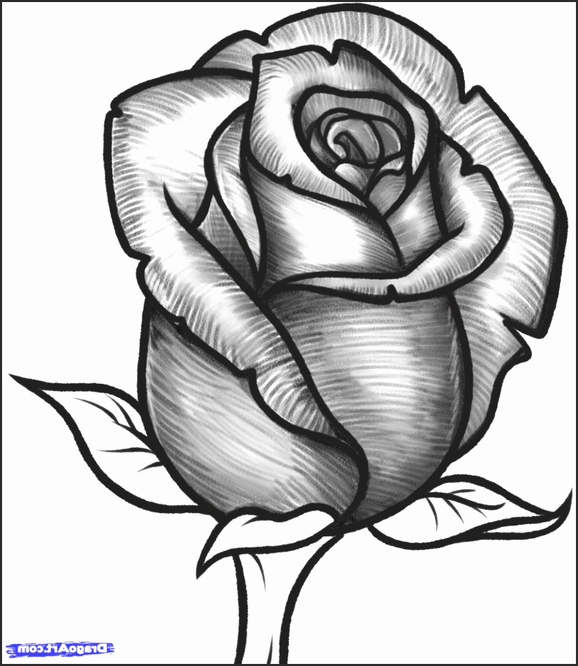 844x972 Open Rose Drawing Ivspg Unique Rose Flower Drawings In Pencil How
