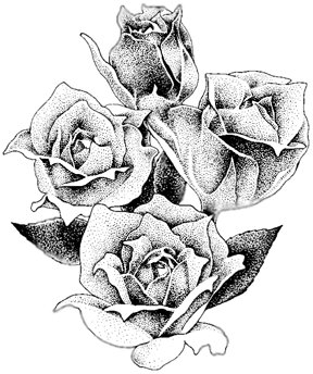 288x344 Pencil Drawing Of Roses Nature's Gift To The Art World