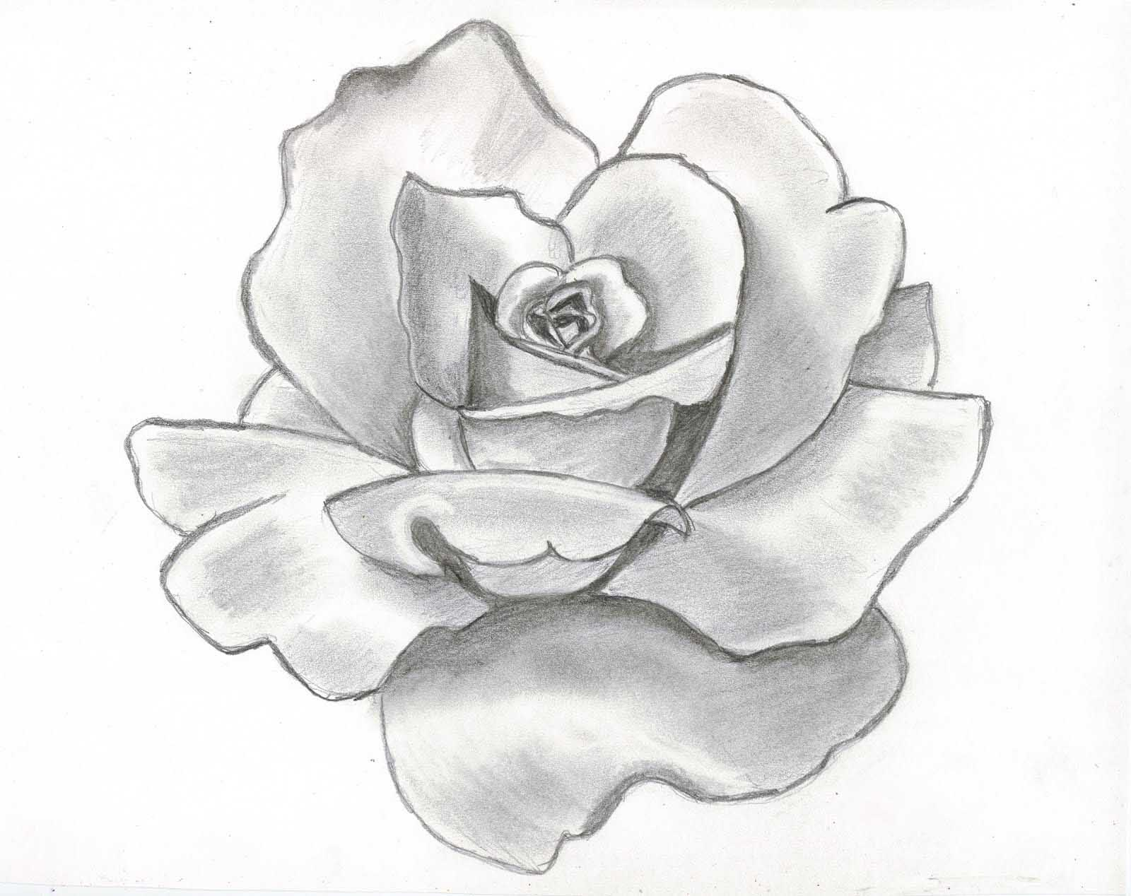 Black And Grey Roses Drawing At Getdrawings Free For Personal