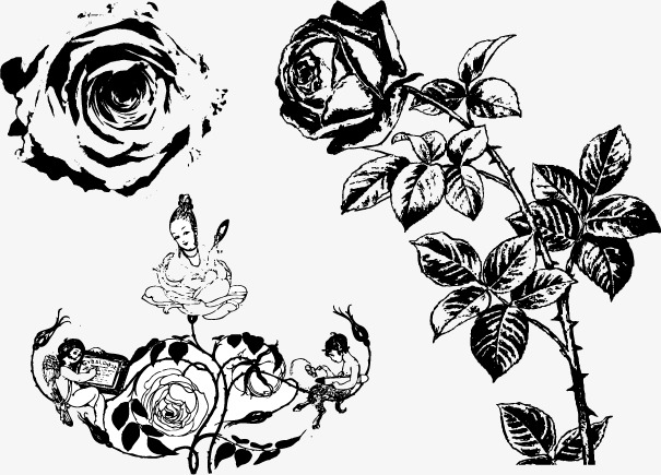 605x435 Vector Sketch Of Roses, Rose Sketch, Black And White, Concise Png