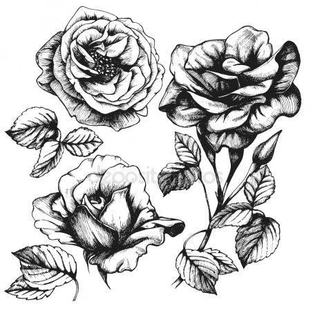 450x450 Detailed Hand Drawn Roses. Stock Photo Victoria Novak