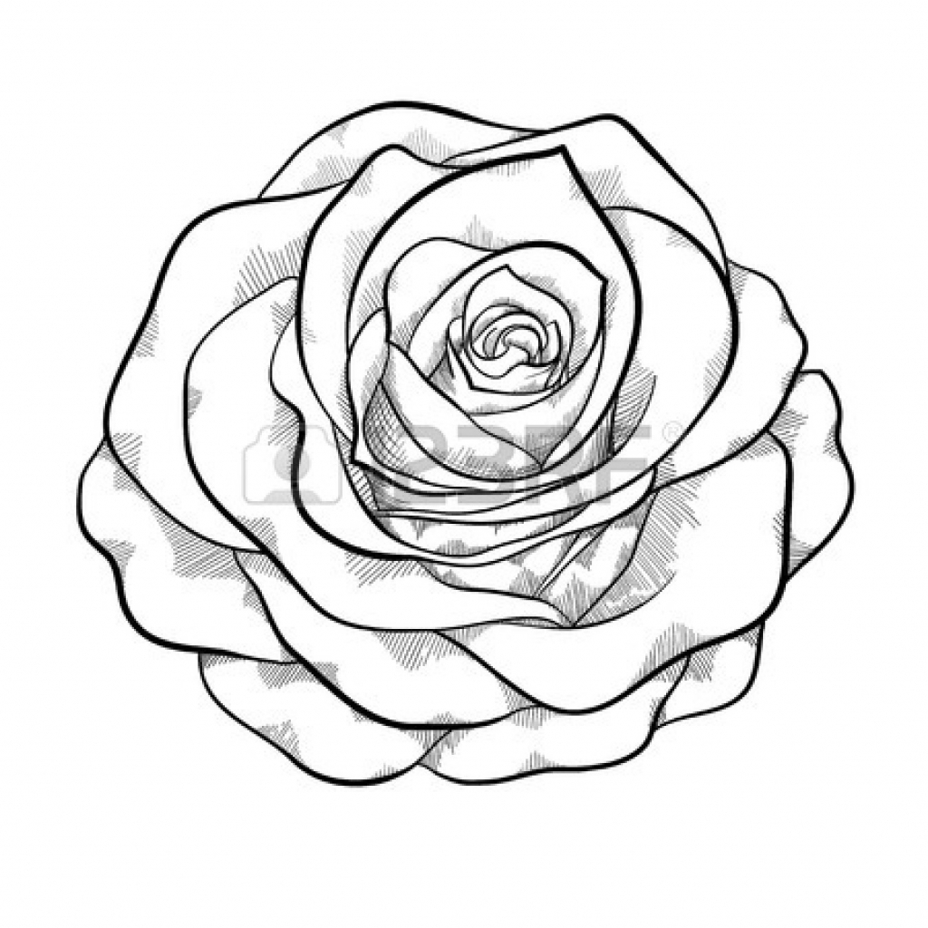1024x1024 Black And White Sketches Of Roses Black And White Roses Drawing