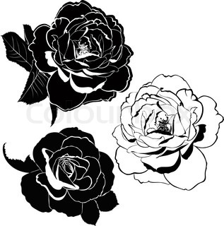 317x320 Black And White Line Drawing Of Rose Flower Stock Vector Colourbox