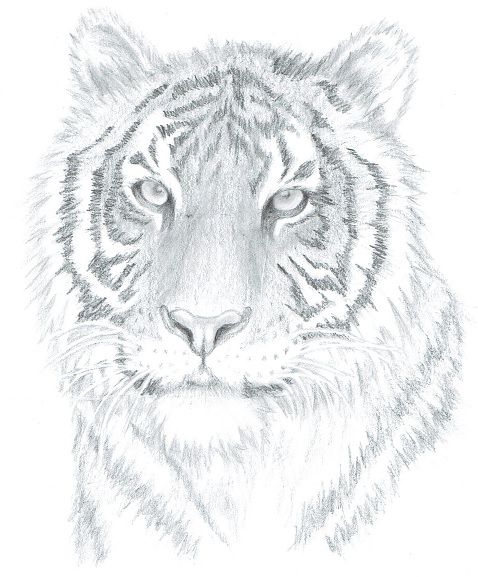 478x577 Sales Letter Animal My Drawing Tutorials