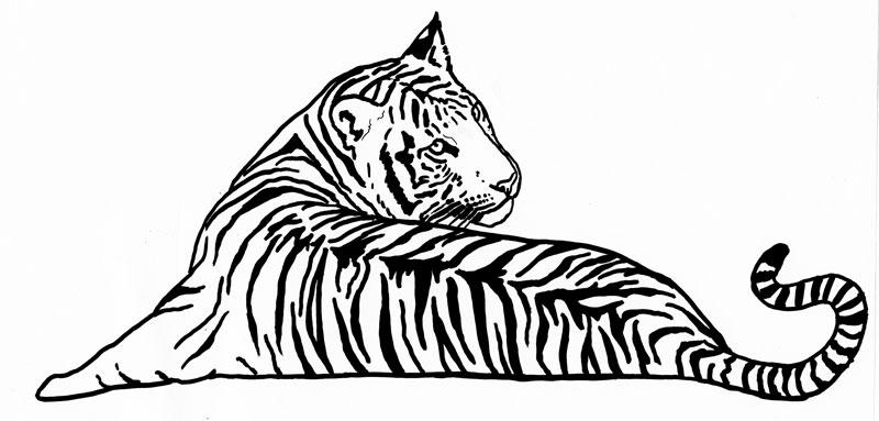 800x383 Drawing Silvercrossfox