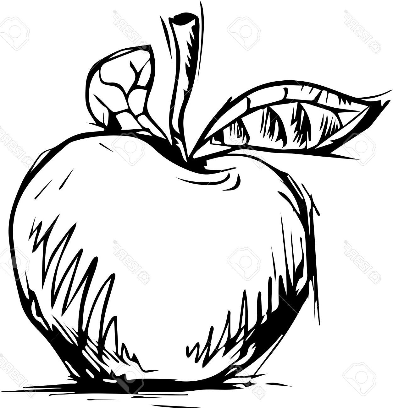 1250x1300 Best Hd Apple Graphic Sketch Vector Isolated On White Stock Library