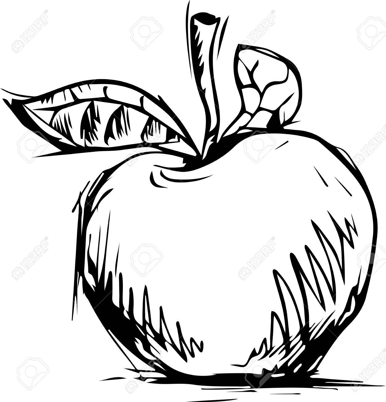 1250x1300 Apple Graphic Sketch, Vector, Isolated On White Royalty Free