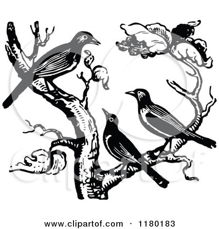 450x470 Black And White Birds On Tree Clipart