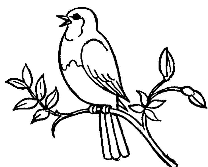 Black And White Bird Drawing At Getdrawings Com Free For