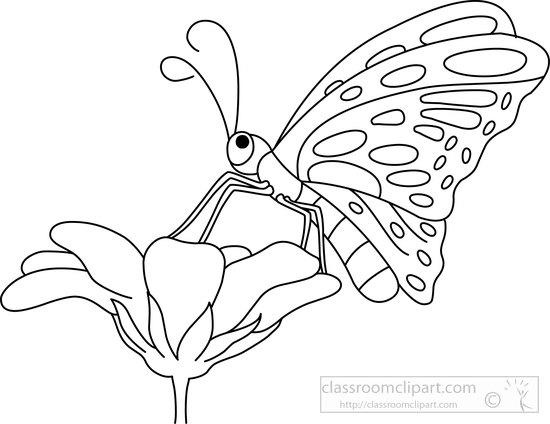 Butterflies Set Monochrome Coloring Book Black And
