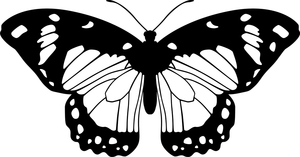 1024x537 Butterfly (Black And White) By Eiluvision