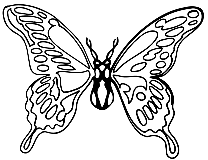 830x640 Butterfly Black And White Butterfly Clipart Black And White 9