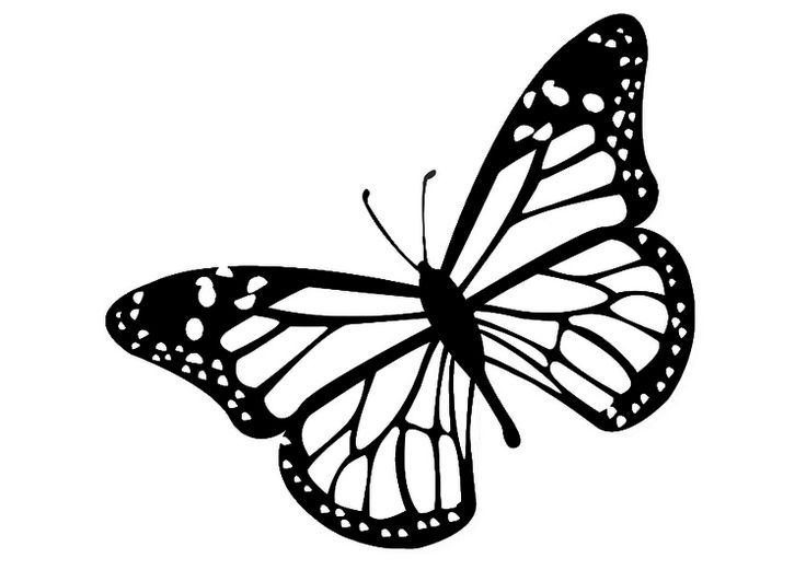 736x521 Monarch Butterfly Drawing Black And White