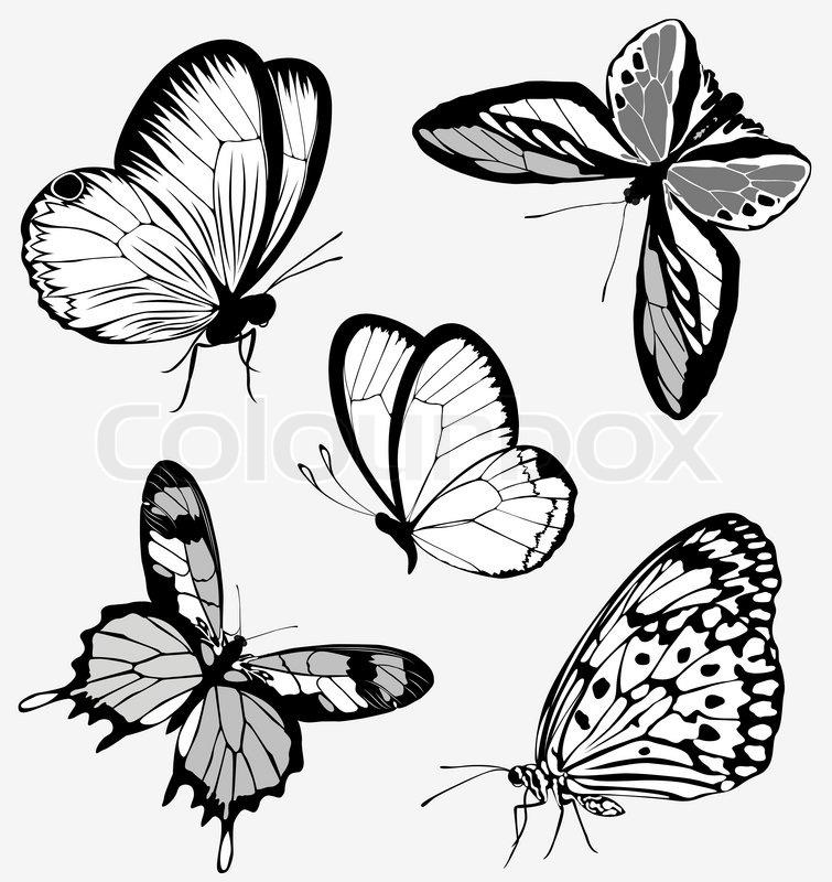 755x800 Set Black White Butterflies Of A Tattoo Stock Vector Colourbox
