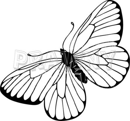 444x414 Linert Drawings Butterflies Blackmp White Line Drawing