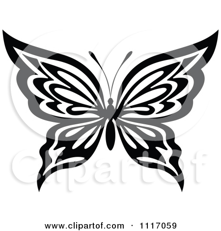 450x470 Black And White Butterflies Pictures Collection