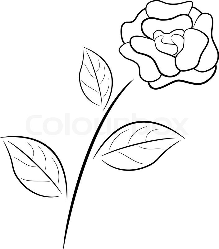 705x800 Abstract Black And White Rose In Outline Drawing Style. Stock