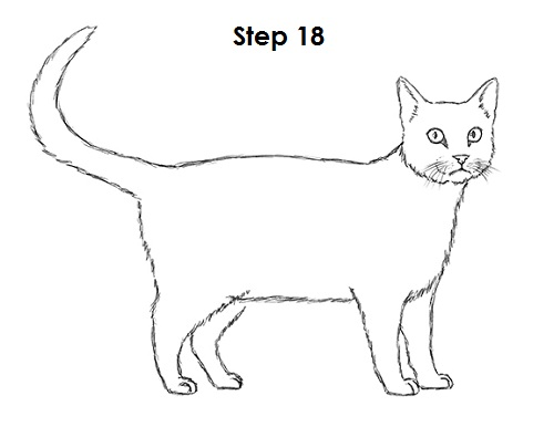 500x386 How To Draw A Cat (Tabby)