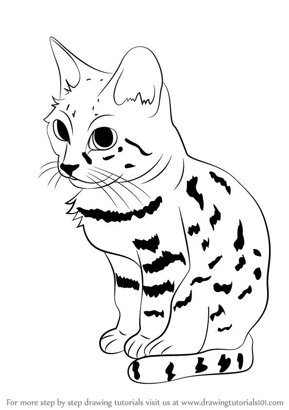 594x844 Learn How To Draw A Black Footed Cat (Wild Animals) Step By Step