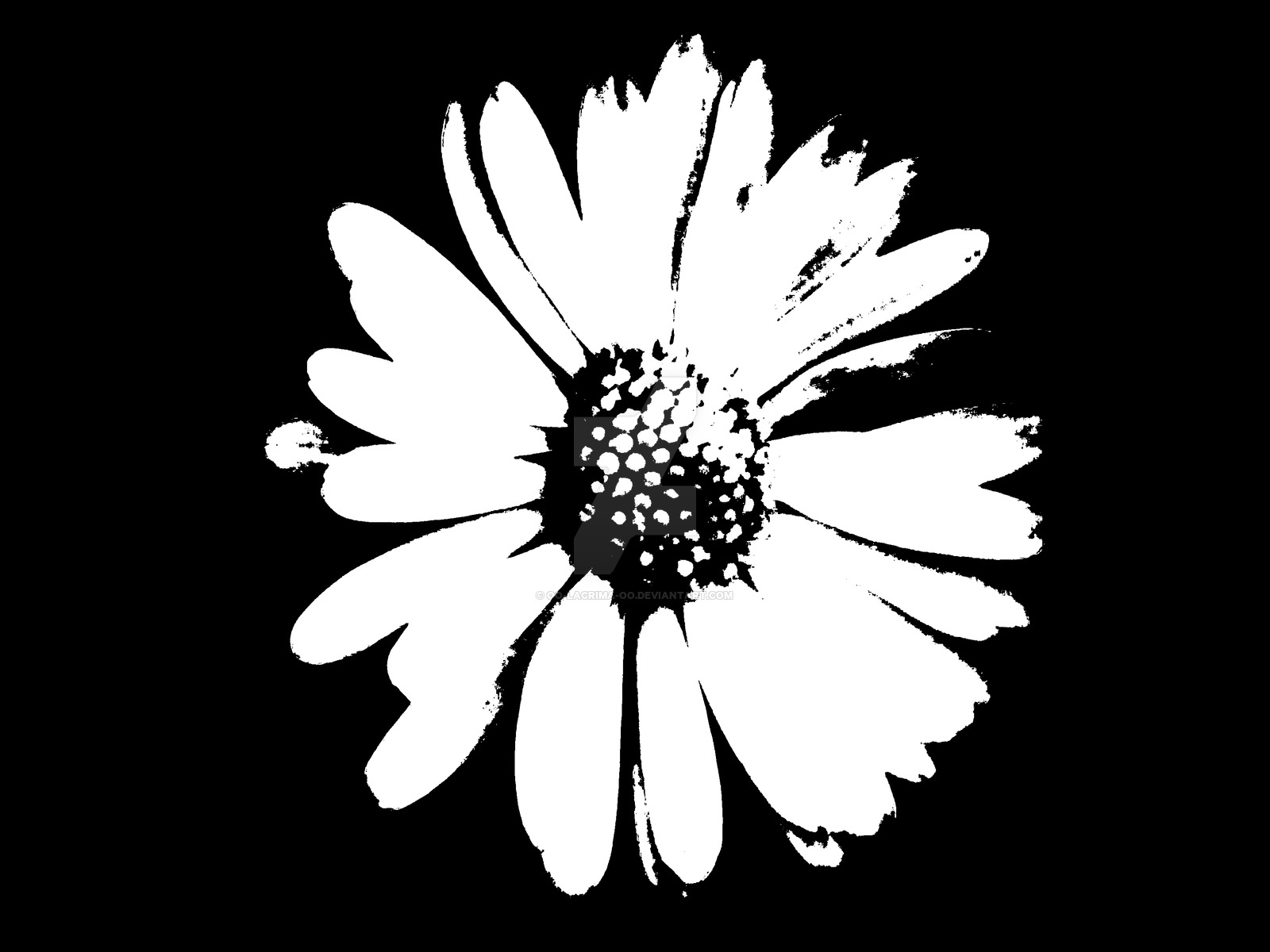 Black and white daisy drawing at getdrawings free for personal 1600x1200 0016 daisy in black and white by oo lacrima oo on deviantart izmirmasajfo